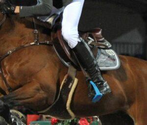 veiligheidsbeugels paard